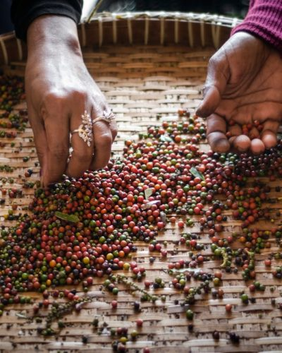Cambodia Kampot pepper farm workers