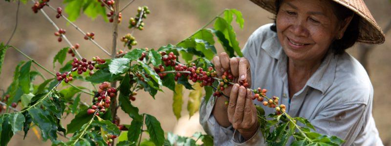 female-farmer-coffee-farm-vietnam